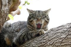 Lazy cat in a tree Stock Photos