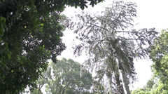 Rio De Janeiro jungle bridge Stock Footage