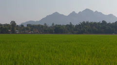 Green Rice Fields in the Karen State of Burma Stock Footage