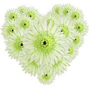Green gerberas heart shape Stock Illustration