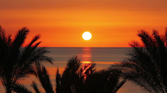 beautiful landscape with palms and sunrise over sea - stock footage