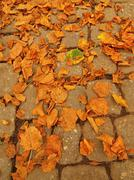 Autumn park cobble stone footpath with dry orange lime tree leaves - stock photo