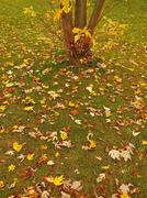 Colorful leaves of aspen, maple and chestnut covered autumn ground. - stock photo