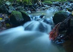 Boulders in rapid stream of mountain river, exposed red gentle aspen   roots - stock photo