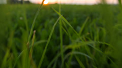 Camera moving quickly through the grass in the meadow, close-up Stock Footage