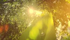 Game of light, retro look natural greenery background with banana leaf. Stock Footage