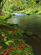 Mountain river with low level of water, gravel with colorful trees. - stock photo