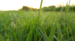 Camera moving through the grass, fresh atmosphere, shallow depth of field Stock Footage
