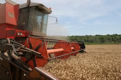 Combine harvesting wheat Stock Photos