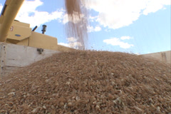 Load of Wheat in Field SD 09 Stock Footage