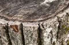 Walnut weathered log detail Stock Photos