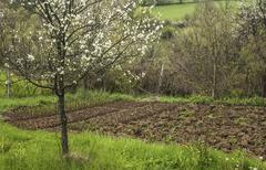 Farmyard with vegetable beds Stock Photos