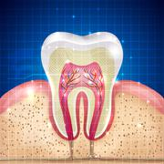 tooth cross section background - stock illustration