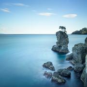 portofino park. pine tree rock cliff. long exposure. liguria, italy - stock photo