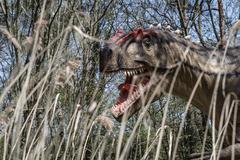 scary isolated dino dinosaurs t rex dino - stock photo