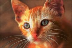 Cat face Stock Illustration