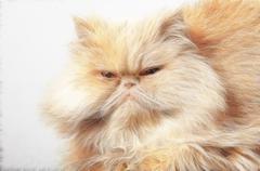 Persian cat Stock Illustration
