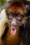 Spider monkey Stock Illustration