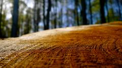 woods. tree profile. annual rings. close up. depth of field - stock photo