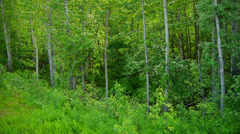 Edge of Lush, Green, Thick Forest Stock Footage