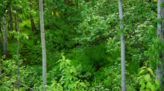 Deep In Lush, Green, Thick Forest Stock Footage