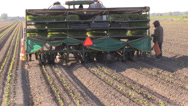 Stock Video Footage of California Agriculture, Vegetable crops