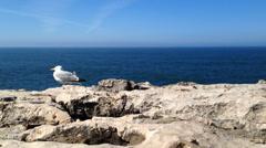Seagulls on the rocks Stock Footage