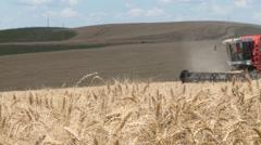 Harvest on Wheat Field HD - stock footage