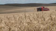 Harvest on Wheat Field HD Stock Footage