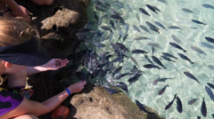 Girl feeds some fishes in Porto de Galinhas, Recife, Brazil Stock Footage