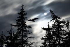 Moonlight with  eagle Stock Photos