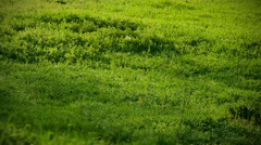 Hills covered with lush, green grass. morning Stock Footage