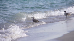 Dove Ocean Slomo Miami 240fps Stock Footage
