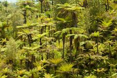 Endemic new zealand tree fern forest wilderness Stock Photos