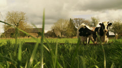 Farm & cows in Normandy, atmospheric weather Stock Footage