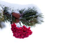 Red mountain ash berries christmas tree ornament Stock Photos
