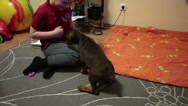 Stock Video Footage of Children playing with doberman puppy in domestic room