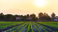 Cultivated land in a rural landscape Stock Photos
