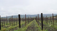 dolly shot - nappa valley vineyards - stock footage