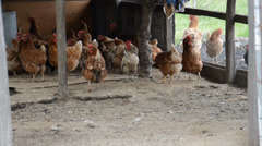 hen house - stock footage