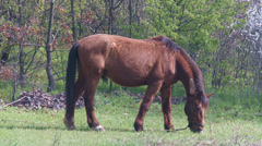 4K Grazing Horse 1 - stock footage