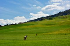 Swiss landscape countryside during spring season with blue sky Stock Photos