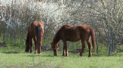 4K Grazing Horses 1 - stock footage
