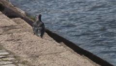 Bird on the water Stock Footage