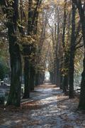 Graveyard road during autumn season Stock Photos