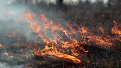 Burning grass in the steppe Stock Footage