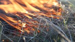 Burning grass in the steppe - stock footage