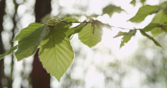 SLOW MOTION: Sun shining through lush leaves in spring Stock Footage