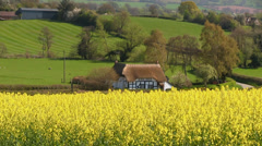 A cottage and oilseed rape field in the English Countryside. - stock footage