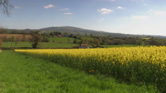 An oilseed rape field in the English Countryside. Stock Footage